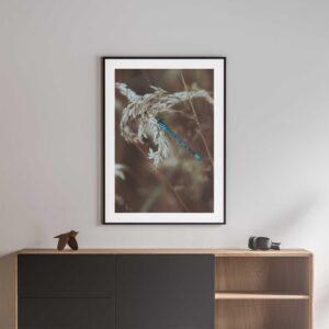 blue damselfly framed photo print