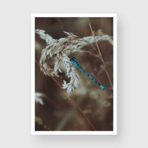 blue damselfly nature photo prints