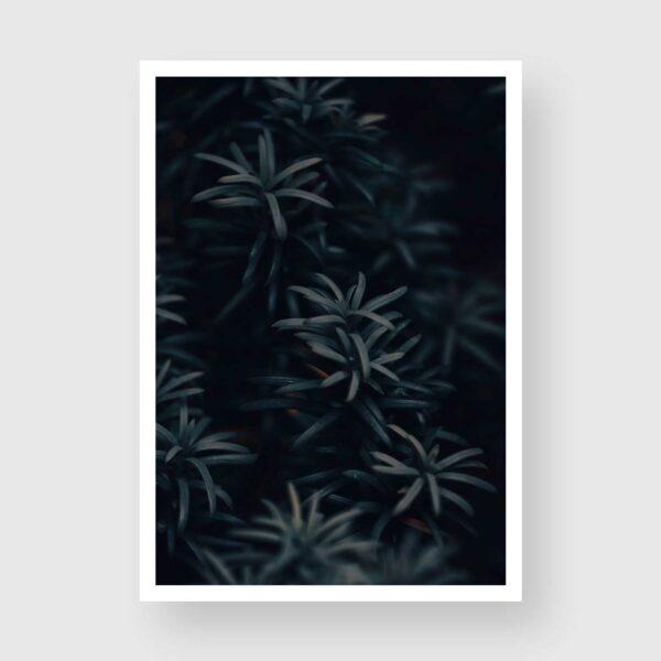 yew tree needles photo print